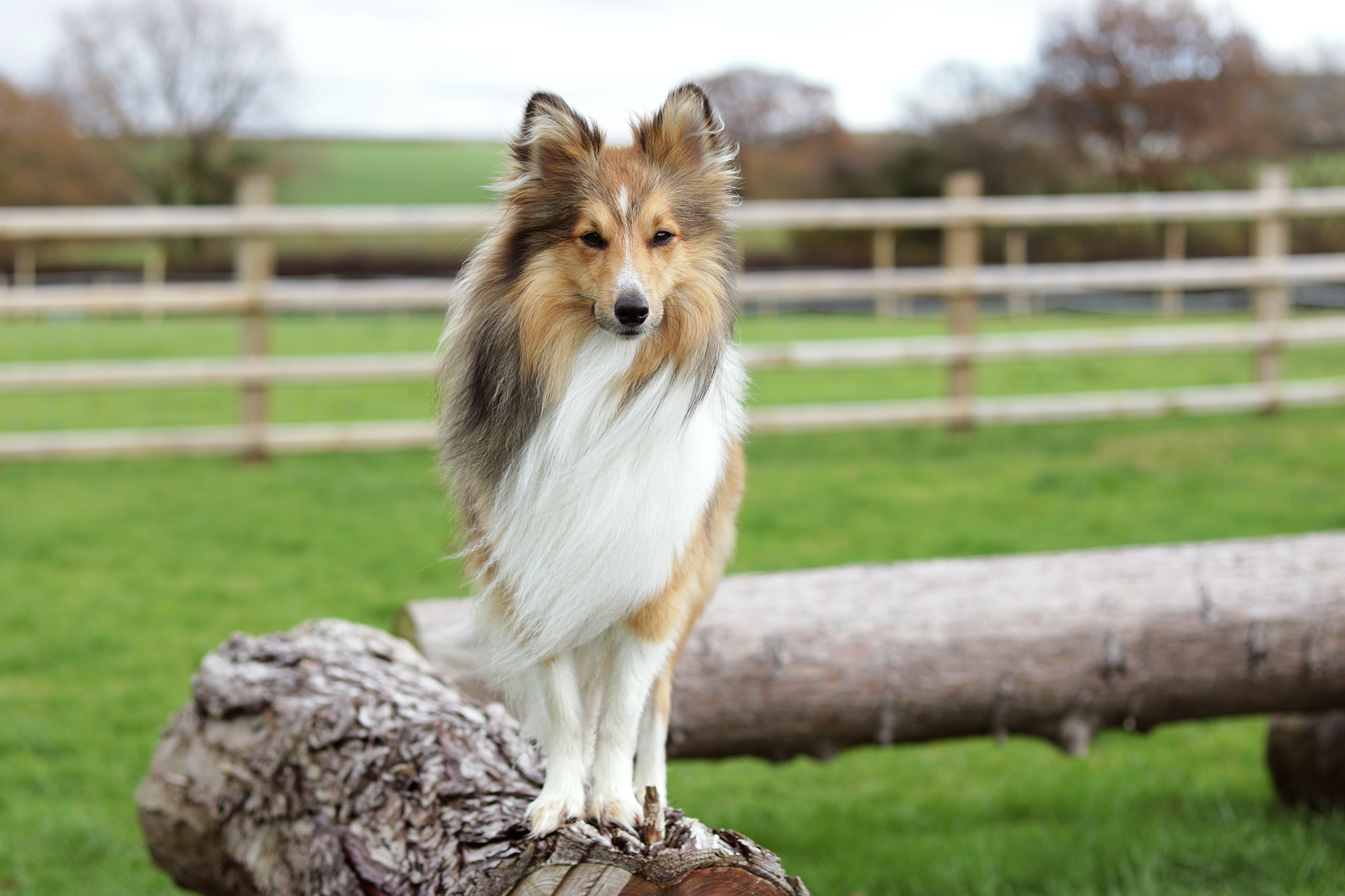 about dog behaviourist andover